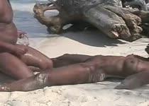 PLaatje van Op zijn hondjes op het strand